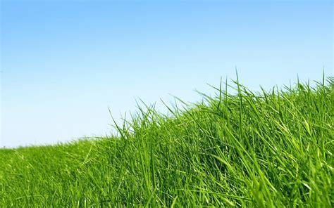 Rumput Tulip Panjang 1 2meter gambar mengenal jenis rumput mulai liar nama gambarnya