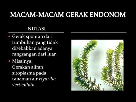 contoh laporan fotosintesis pada tanaman hydrilla gerak pada tumbuhan