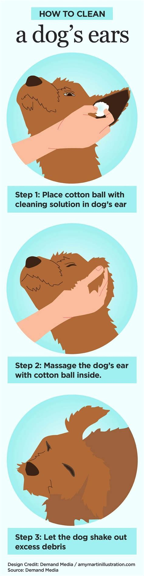 water in dogs ears how to clean a s ears with vinegar water its always pets and health