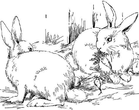 coloring pages of animals in the forest forest coloring pages