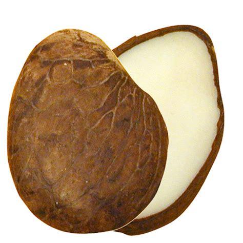 tagua nut white tagua nut slices from ecuador fair trade