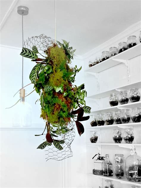 Kokedama Dischidia suspended plant sculpture lands