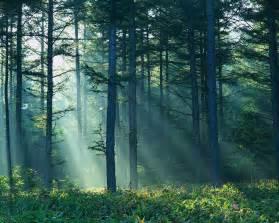 Home Design 3d Export To Pdf Thinkingaboutchange Boreal Forest