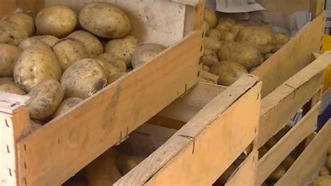 comment cuisiner les pommes de terre quand et comment r 233 colter les pommes de terre patates