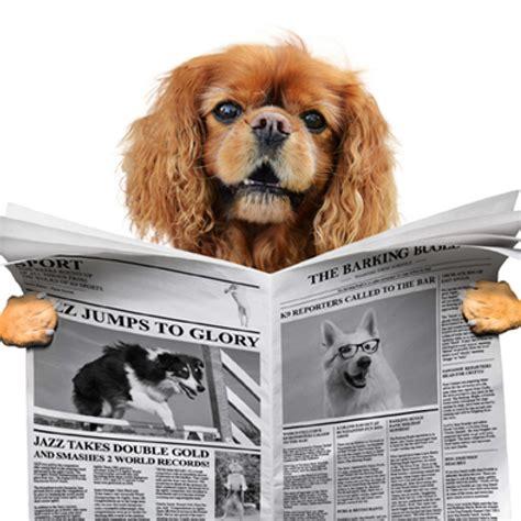 hunstanton fun dog show home facebook