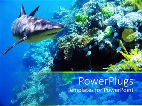 Powerpoint Template Underwater Coral Reef Ocean With Shark And Small Fish 17382 Shark Powerpoint Template
