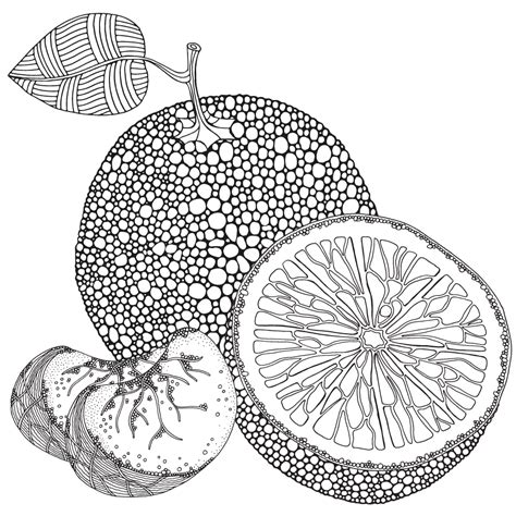 fruit zentangle zentangle fruit coloring book on behance