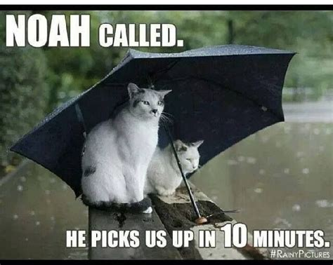 Funny Rain Memes - pinterest the world s catalog of ideas
