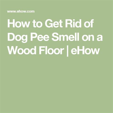how to get rid of pee smell in bathroom 1000 ideas about dog pee smell on pinterest pee smell