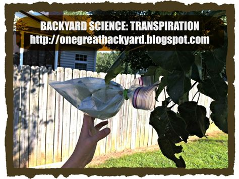 backyard science games 90 best images about backyard science activities on