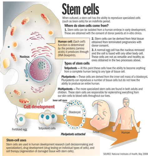 stem cell treatment now stem cell treatment now some alternative umbilical cords blood banking for stem cells therapy