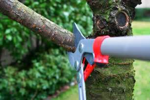 Tree Trimming 3 Safety Tips To Remember While Trimming Your Trees