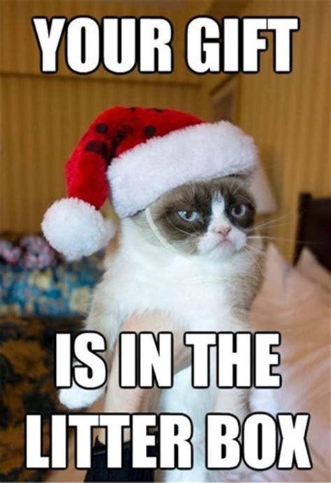 Christmas Gift Meme - funny grumpy cat quotes pictures worth sharing pets world
