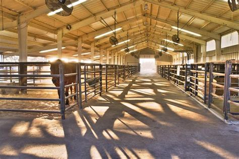 The Barn Show Show Horse Barn Google Search Equines Pinterest
