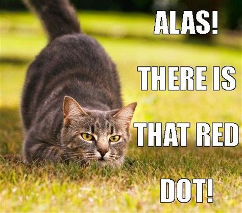 Tabby Meme - 1000 images about funny cats memes on pinterest cats