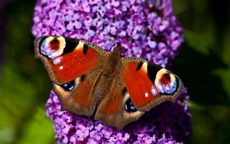 plants  atttract butterflies   garden