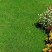 semi erba giardino sementi erba prato