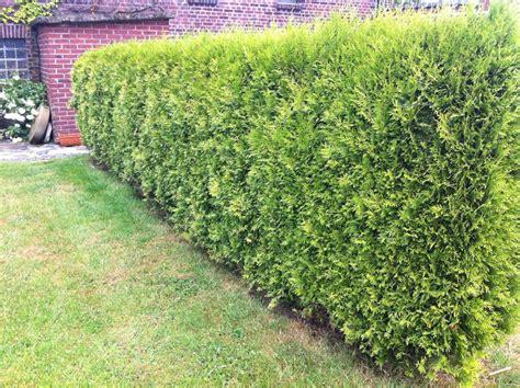 Winterpflanzen Für Den Garten by Winterharte Pflanzen Robuste Gew 228 Chse F 252 R Den Garten