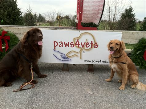 therapy dogs for sale tree sale benefits veterans the unionville times