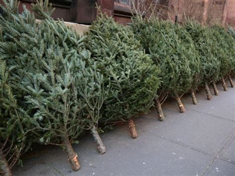how to dispose your christmas tree real property