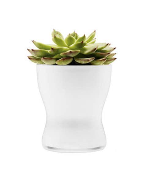 vasi con riserva d acqua scopri vaso per fiori con riserva d acqua 216 11 cm