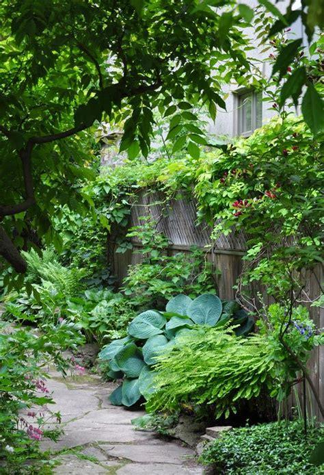 gardening ideas   narrow garden  suburban