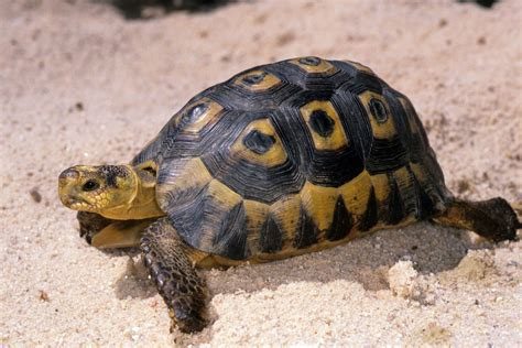 turtle images types of turtles tortoise reptile gardens