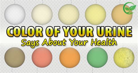 what is this color color of your urine says about your health healthy food