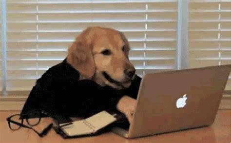 Meme Gif - dog work gif find share on giphy