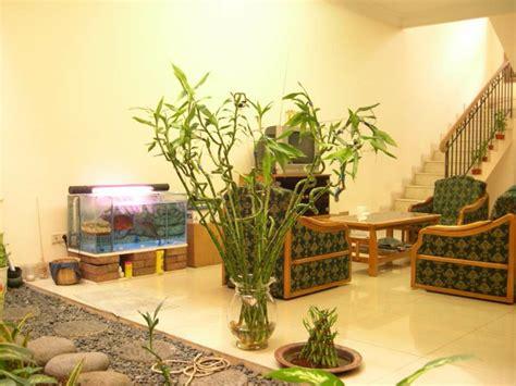 feng shui pflanzen eingangsbereich welche feng shui pflanzen sollten sie laut feng shui im