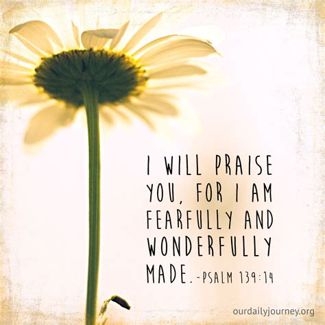 fearfully and wonderfully made my journey to self worth books fearfully and wonderfully made our daily journey