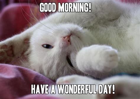 Good Morning Memes For Her - cute cat good morning memes for her meme good morning
