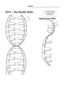 Dna and rna structure worksheet dna coloring