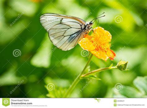 imagenes de mariposas q brillan image gallery hermosas flores con mariposas