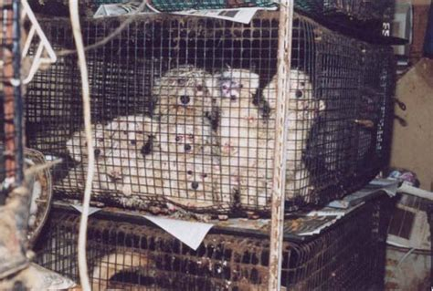 puppy mill pictures puppy mills the scourge of the world