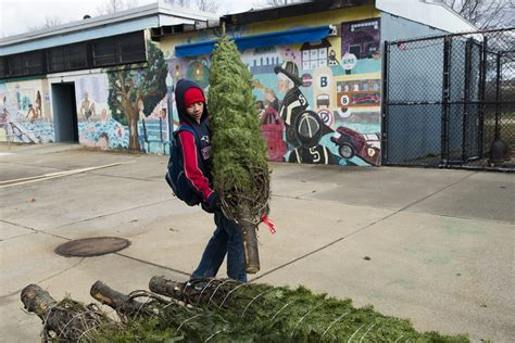 tree shop somerville collection somerville tree pictures best