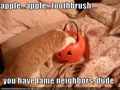 Halloween Cat Meme - the shady glade lol of the week happy halloween