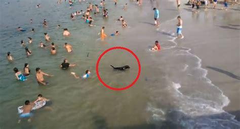 imagenes hermosas de verano un lindo perrito disfrutando en la playa durante el verano
