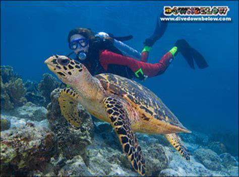 sipadan kapalai dive resort | diving sabah? dive downbelow!