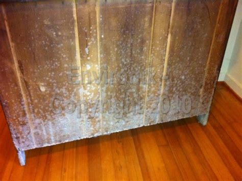 mold couch how to get mold furniture annihilate black mold on wood
