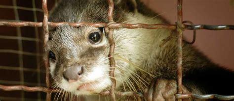 animali da gabbia no agli allevamenti di animali da pelliccia centro di