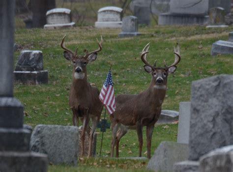 Deer Racks by Big Bucks And