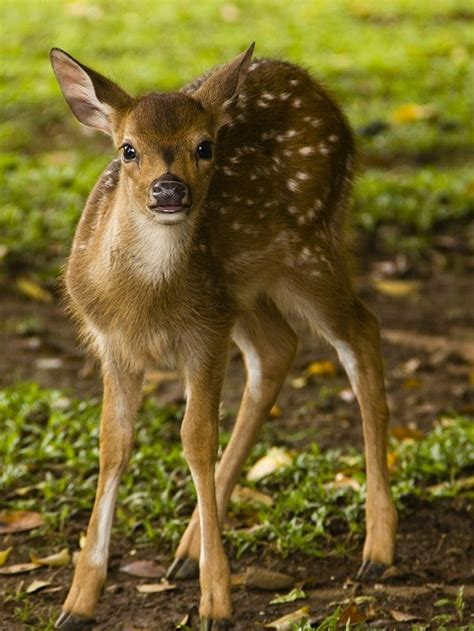 Detox Deer by Lessons From A Deer Don T Eat Out Of Season Dr