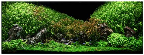 aquascape plant aquascape of the month july 2009 quot oshun quot aquascaping