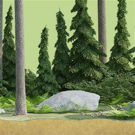rainforest sections freedeelab trzydelab forest section render
