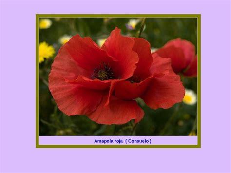 imagenes flores silvestres sus nombres las flores y el significado de sus nombres 1