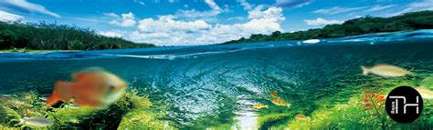 Ada The International Aquatic Plants Layout Contest 2015 aqua th iaplc 2015