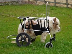 Dogs For Blind Foundation Miniature Horse Wheelchairs