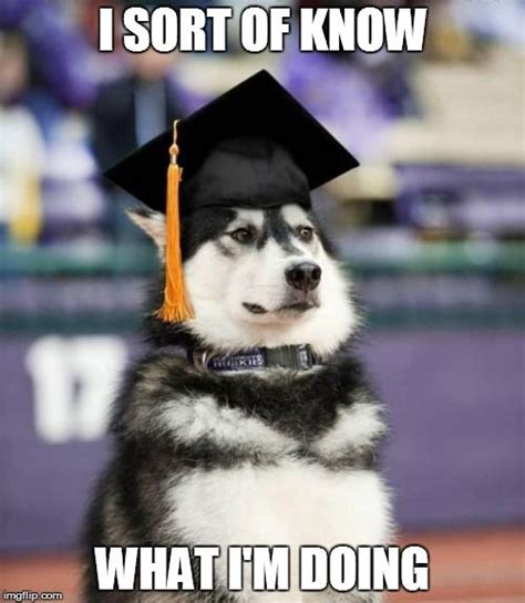 College Graduation Memes - graduate dog meme generator imgflip be funny