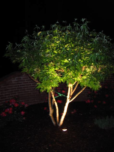 Landscape Up Lighting Uplight Trees Landscape Services